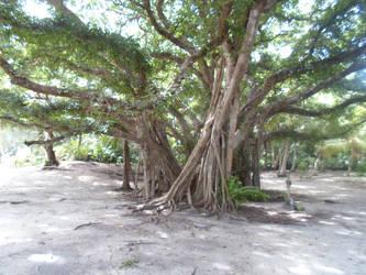 Nov Saipan 2013 102 by dnalrednow-ecila