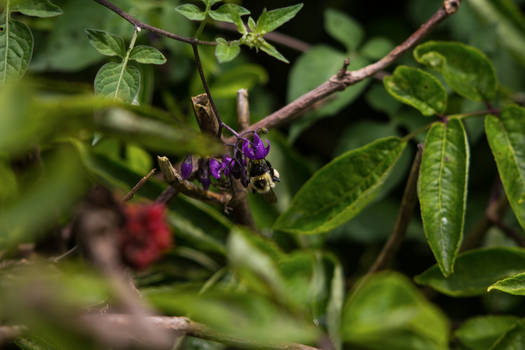 Bee with purple flower