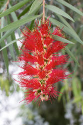 Different red flower