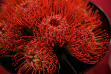 Red Cushion Top Flower by Persephonie1019