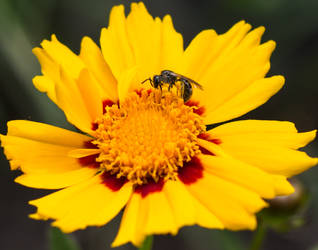 Bug on Yellow Flower by Persephonie1019