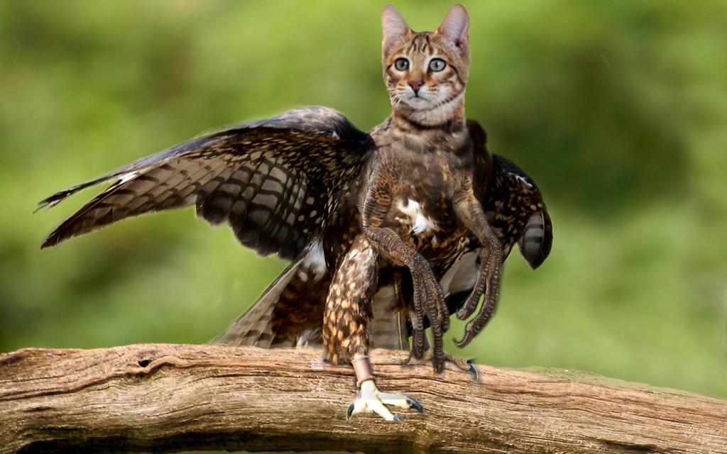 Cat Raptor Chimera by GoddessSpiritwolf