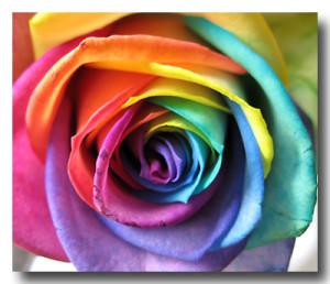 RainbowRose123's Profile Picture