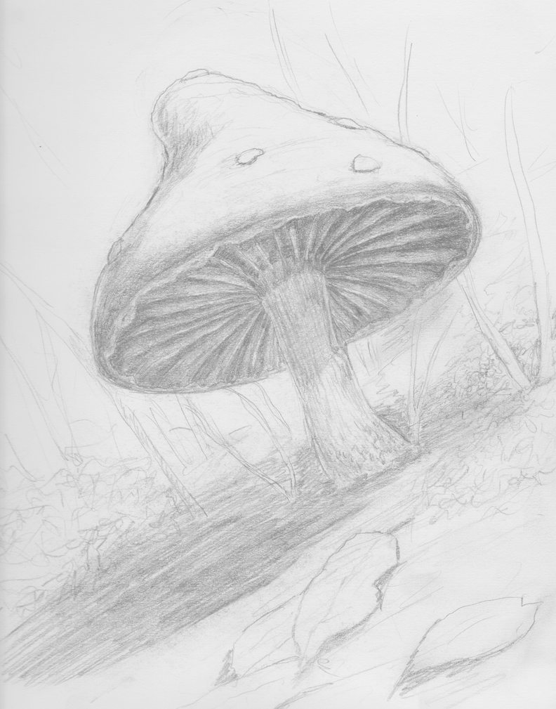 Le mushroom de fairy by aliaotk on deviantart for Fairy on a mushroom drawing