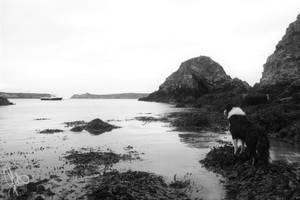 Faithful Sea Dog