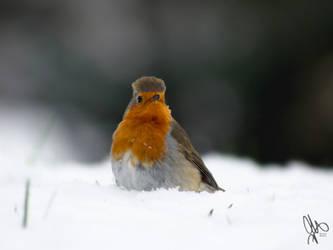 Robin in the Snow by NaturalModica