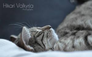 Lazy Cat by ValkyrjaHikari