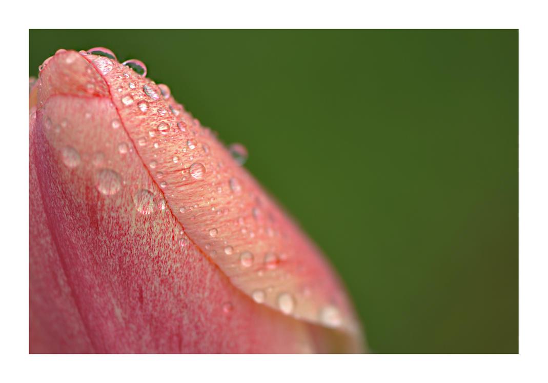 April's Rain by ValkyrjaHikari