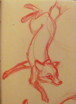Stretched out fox