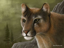 Always Watching- Mountain Lion by ChuckRondeau