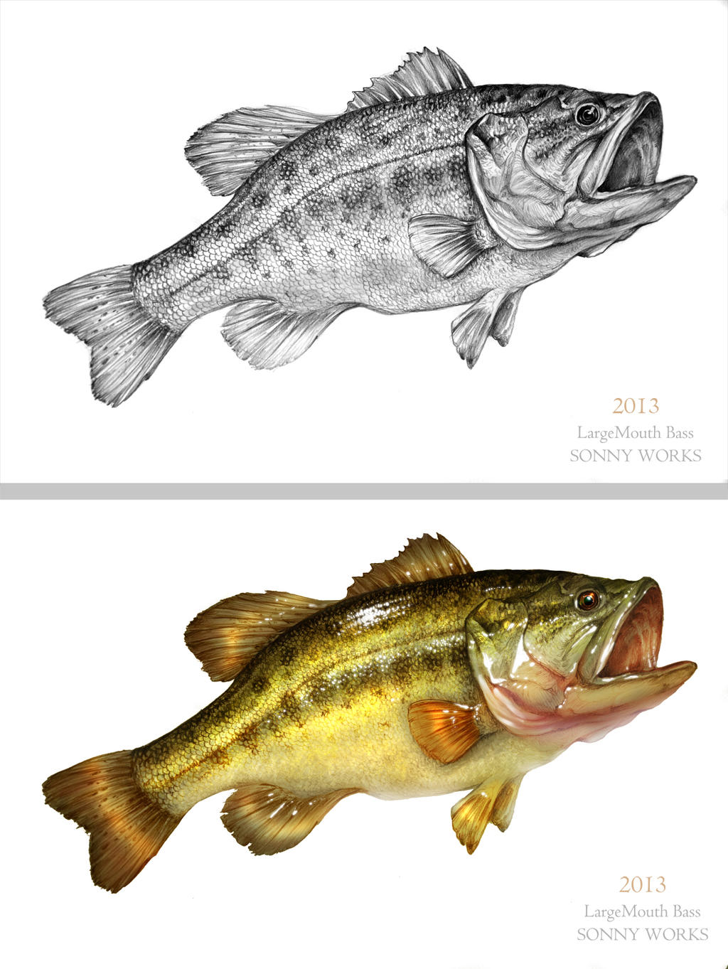 Largemouth Bass Drawing at GetDrawingscom  Free for