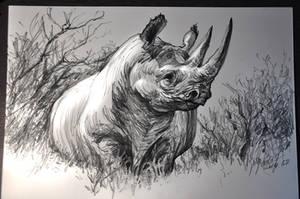 Black Rhino by banhatin