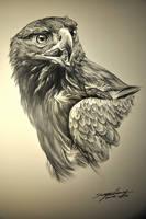 GoldenEagle by banhatin