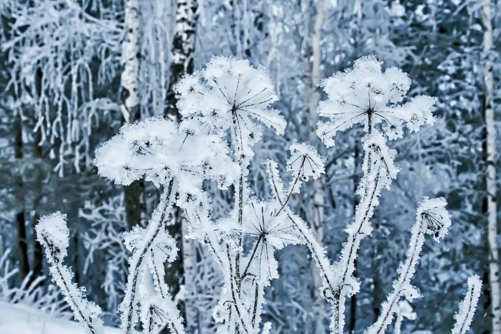 Winter 3 by Lubov2001