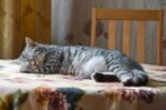 Sleeping cat by Lubov2001
