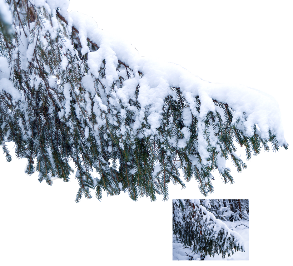 Christmas Tree Branch In The Snow By Lubov2001