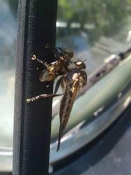 Bug Eat Bug by tostitosrodrigoez
