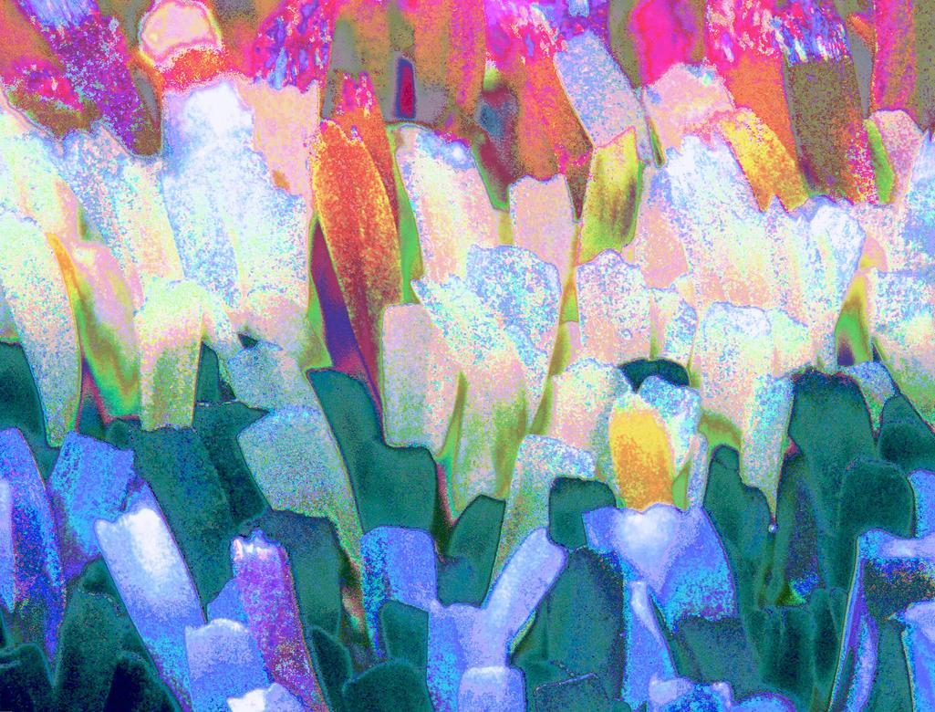 flowery field by 1774744