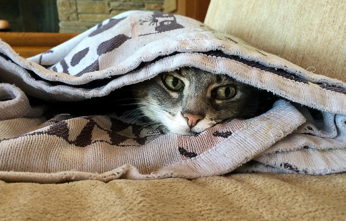 Tenzing likes to hide by dkbarto