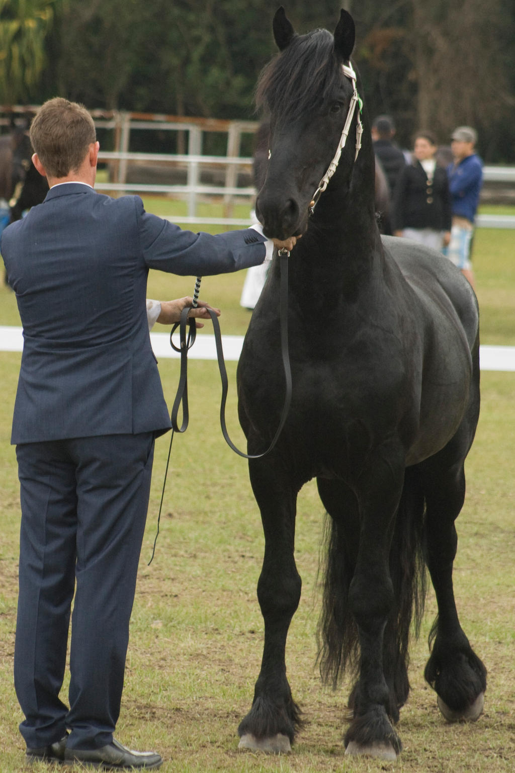 Friesian stand looking forward by AmoretteRose