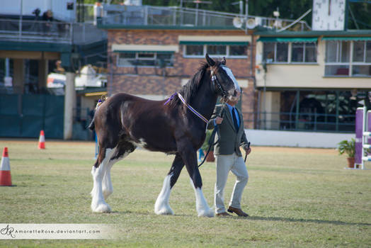 RQS Clydesdale #7