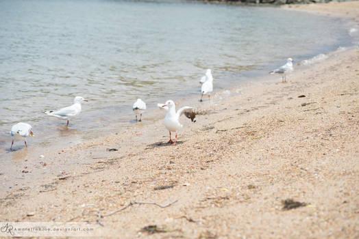 Seagulls #214