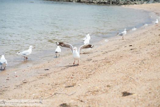 Seagulls #213