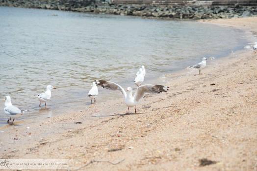 Seagulls #212