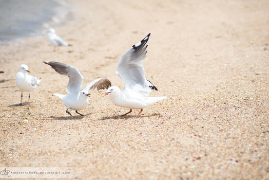 Seagulls #211