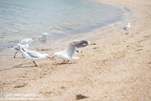 Seagulls #209