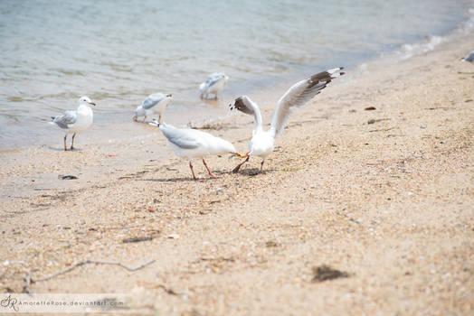 Seagulls #208