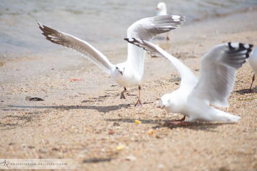 Seagulls #207