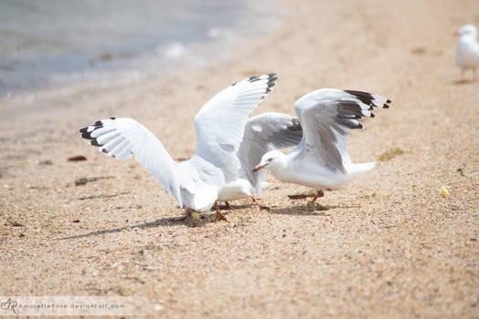 Seagulls #206