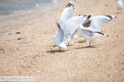 Seagulls #205