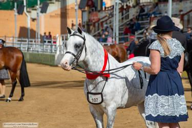 RQS Australian Pony #144
