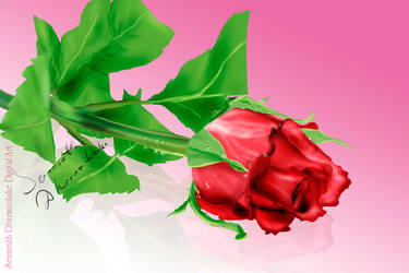 Rose Flower by senarath