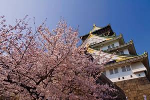 Osaka castle in spring.