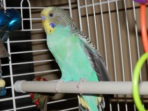 actipton80's Profile Picture