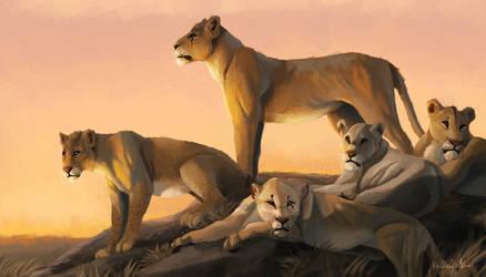 Lionesses pride