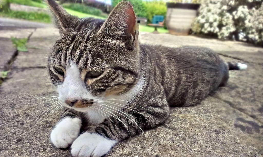 Cat II by divafica