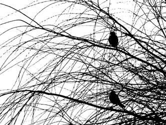 Birds by divafica
