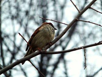 Tiny Sparrow by divafica