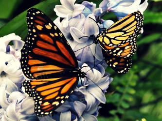 Butterflies by divafica