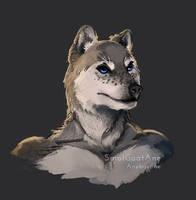 Wolf - Portrait Speedpaint by PygmyGoats
