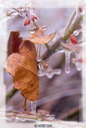 frigid leaf by doverby