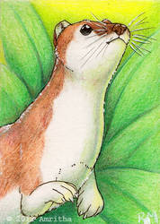 Summer Ermine ACEO by Amritha