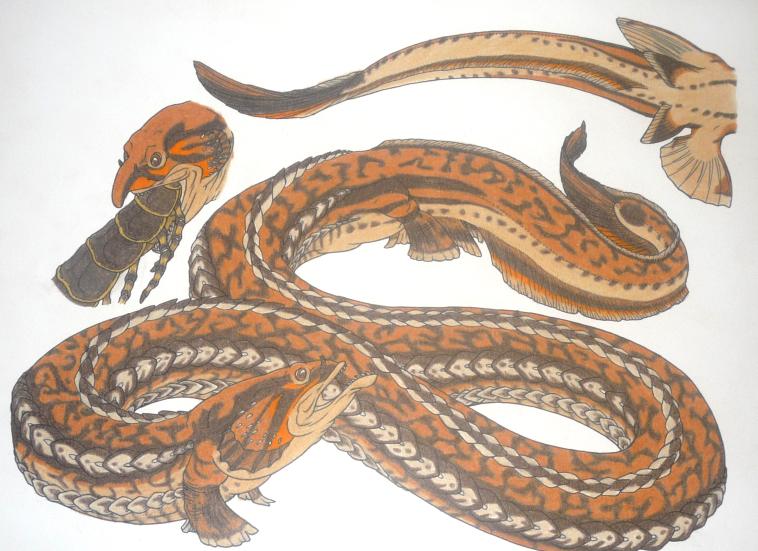 Piranhaconda by Battleferrets