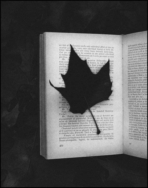 The End by AlexandrinaAna