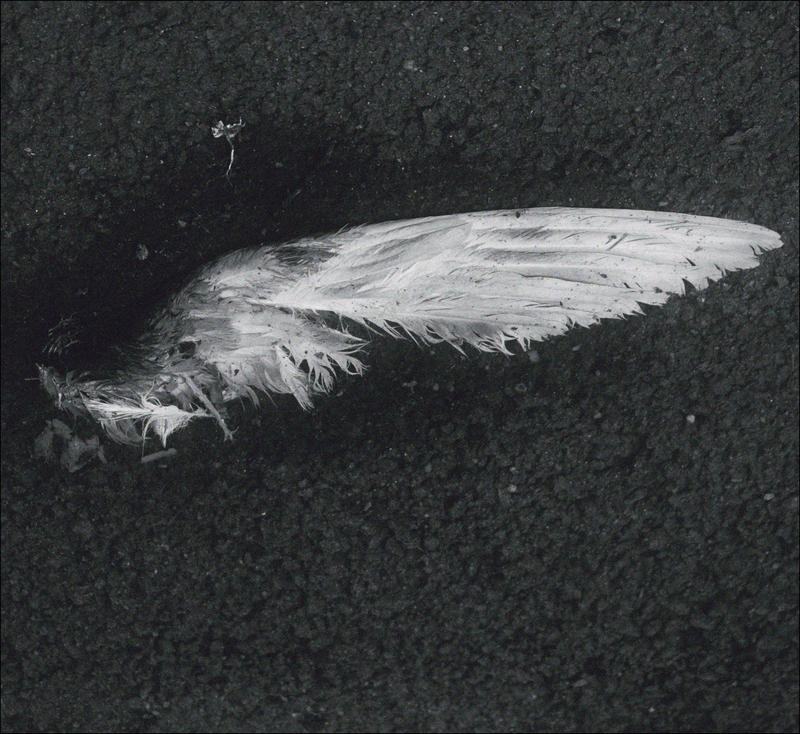 Gandurile unui mort by AlexandrinaAna