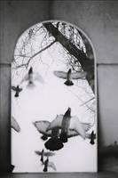 Se innoreaza cu pasari. by AlexandrinaAna